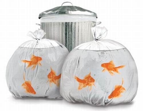 goldfish. These novelty goldfish trash