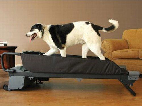Canine-threadmill