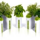 power_plant_herb_garden1