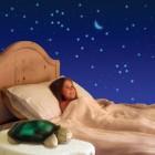 Twilight turtle night light2