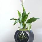 EYE Flower Pot