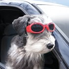 canine-goggles1