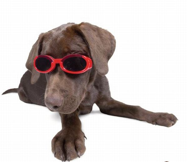 canine-goggles3