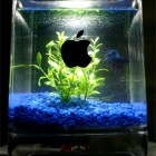 i-fish-tank